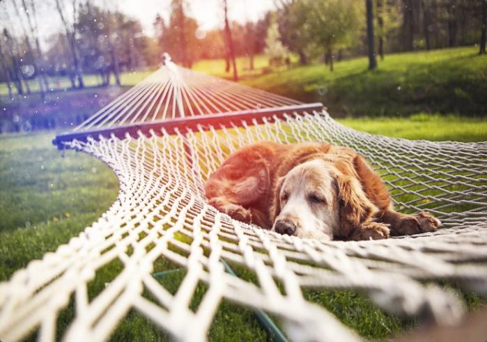 Screenshot-2017-11-18 Park Grass Nature Hammock Dog Rest #6974513.png